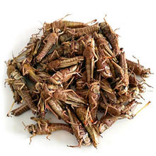 insect protein dried locusts china supplier