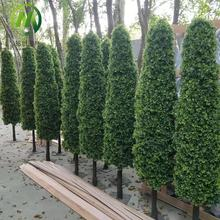Customized 150cm height artificial cypress tree, potted decorative wood tree trunk cypress tree plant artificial for sale