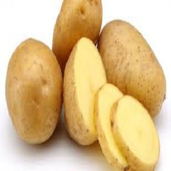 fresh healthy potato for importers