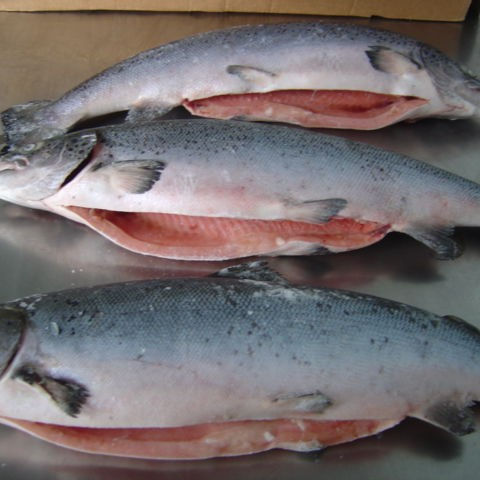Whole Norwegian Salmon/Pacific Saury (Mackerel Pike),Frozen fish,Frozen sea food .
