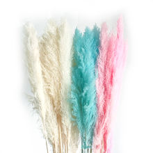 Wholesale Korean style Wedding Decoration preserved real flowers dried natural pampas grass large