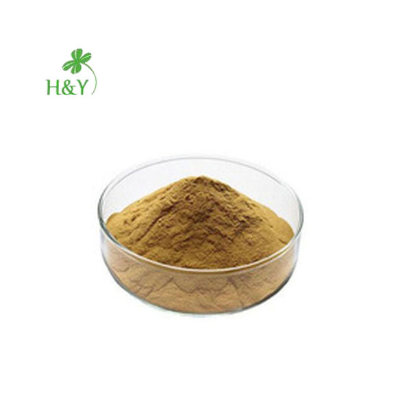 Free shipping 100% Natural Myristica Fragrans Houtt/Nutmeg Extract Nutmeg Powder 20:1 In Bulk