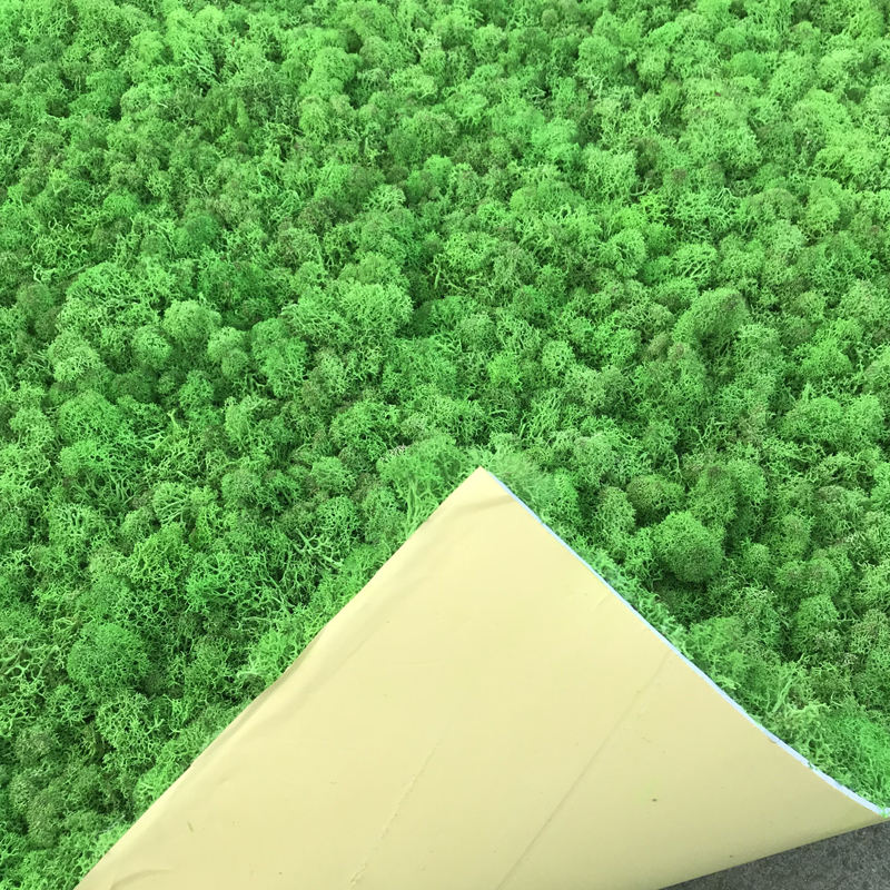 Manufacturers Selling Eternal Moss Coral Grass Wall Interior Decoration Reindeer Bryophyte Wall