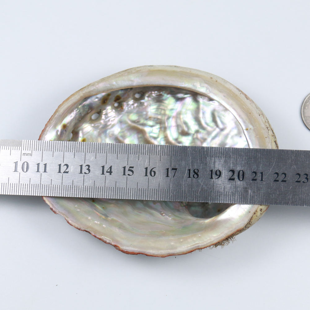 Pure natural deep sea carving and polishing raw abalone shell paua shell in low price