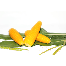Wholesale Price Frozen Yellow Fresh Corn Cob Steamed Sweet Corn