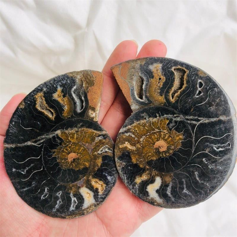 Natural Polished Ammonite Stone Fossil Slice Specimen Gemstone Snail Fossil For Sale