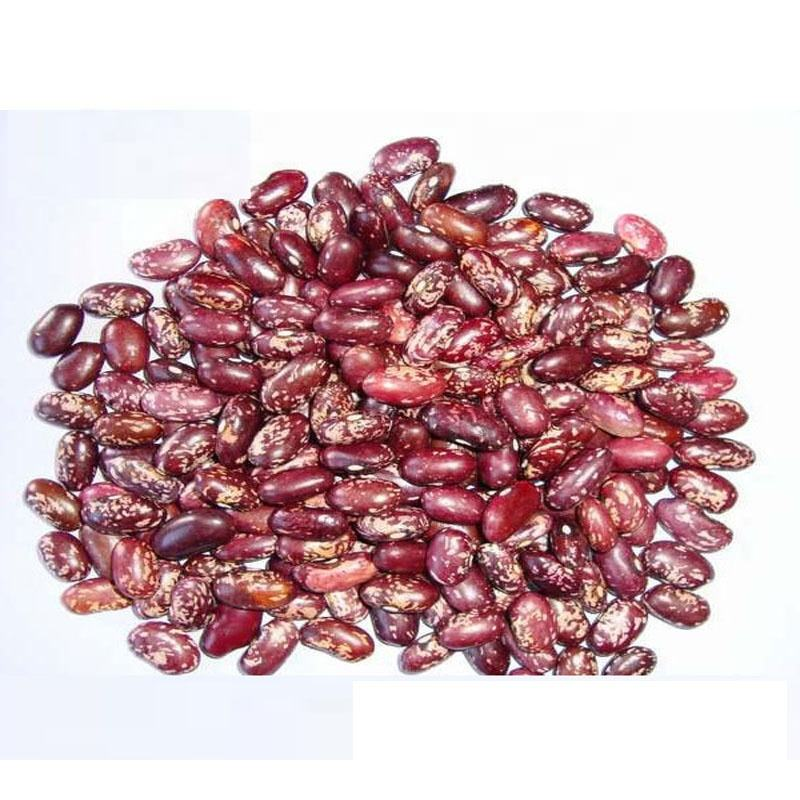 TTN Export Sale Dry Red Speckled Kidney Beans