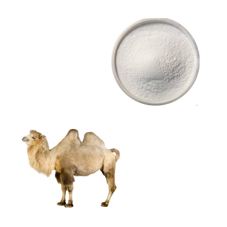 Top Quality 100% Pure Natural Fresh Camel Milk Powder/Camel Milk Powder 1kg