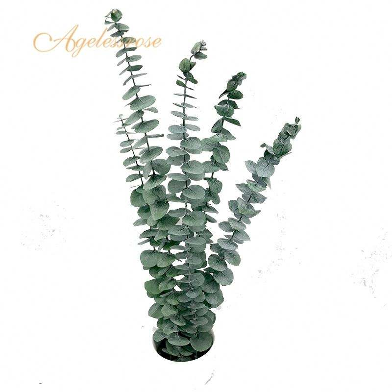 Best Price Good Price green leaves eucalyptus leaves for favors wedding gift