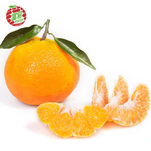 Hot sale Chinese holiday baby fresh juicy orange mandarin