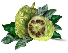 Factory price  ripe organic fresh noni fruit from Latitude 18N Hainan Lava Soil Islands dried fruit chips noni slice noni juice