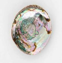 Wholesale Bulk of Polished Abalone Sea Shell Sage Smudging Bowl Healing Home Decor (WS0084587176063)