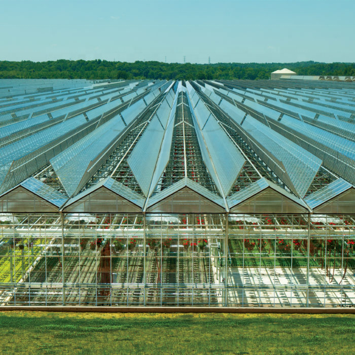 Plastic Shed Greenhouse High Quality Impact Resistance Commercial Greenhouse Plastic Sheet