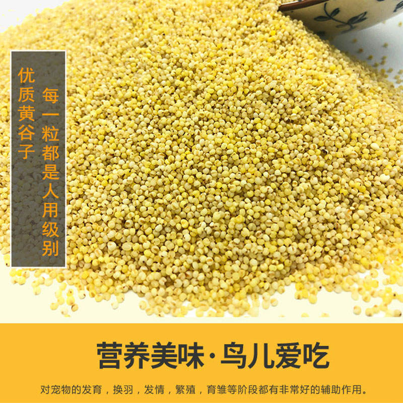 Hot Sale Factory Supply Bird Food Panicum Shelling Millet Supplier