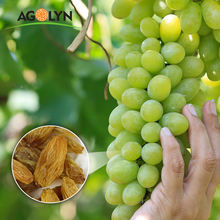 AGOLYN XinJiang Dried Bulk Grapes Sweet Golden Raisins Kismis