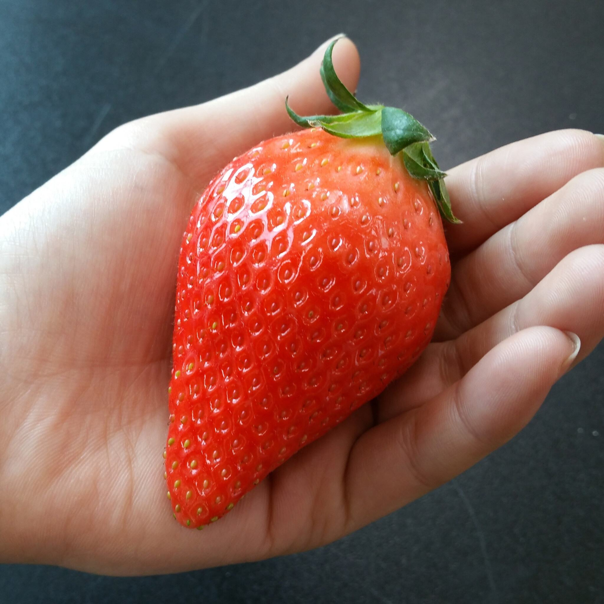 Delicious Fresh Strawberry at Best Price