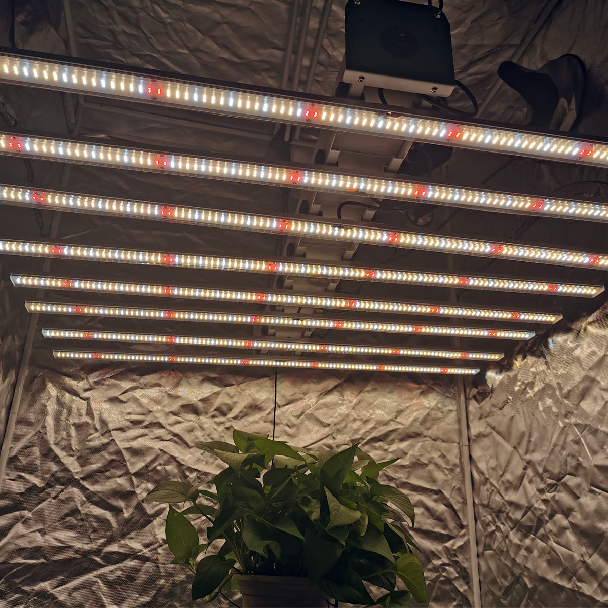 Samsung LM301H/301B 600W 800W Spider Bar Volledige Spectrum 660nm Indoor Plant <span class=keywords><strong>Led</strong></span> <span class=keywords><strong>Grow</strong></span> Licht
