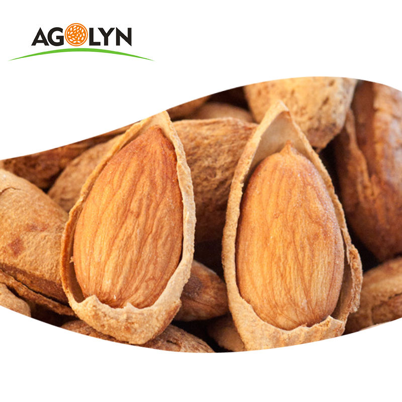 King Size salty flavor organic Xinjiang Almond Nuts