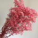 more than 20 colors natural preserved baby breath flowers for flower shops