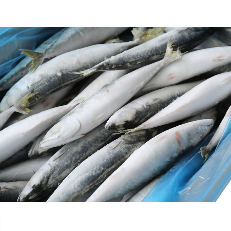 Wholesale Seafood Frozen Pacific Mackerel Fish