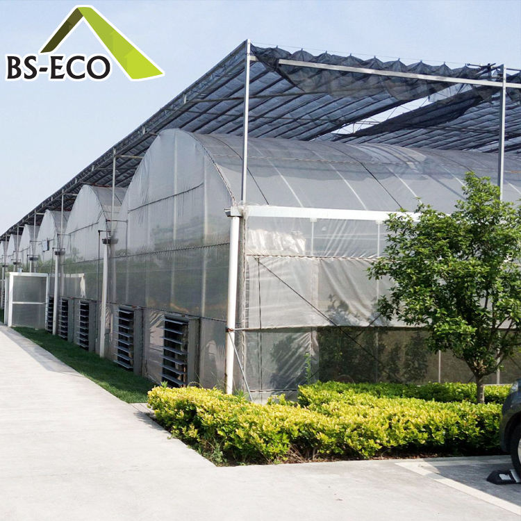 Commercial Hydroponic Systems Growing Greenhouse Vegetables Multi-span Green House with Climate Control System