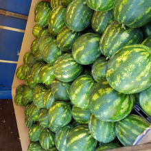 High quality greece red sweet water melon wholesale fresh watermelon