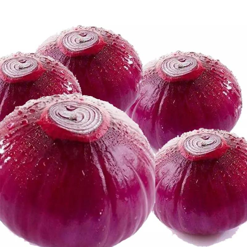 Best Price Chinese Export New Crop Fresh Purple Red Onion for Sale