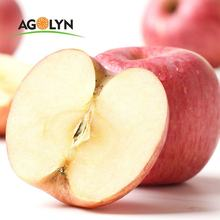 Best quality 2019 new crop red fuji wholesale Fuji Apple