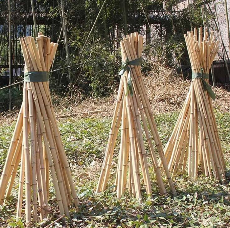 Agriculture Bamboo Sticks Raw Bamboo Poles for Nursery Planting