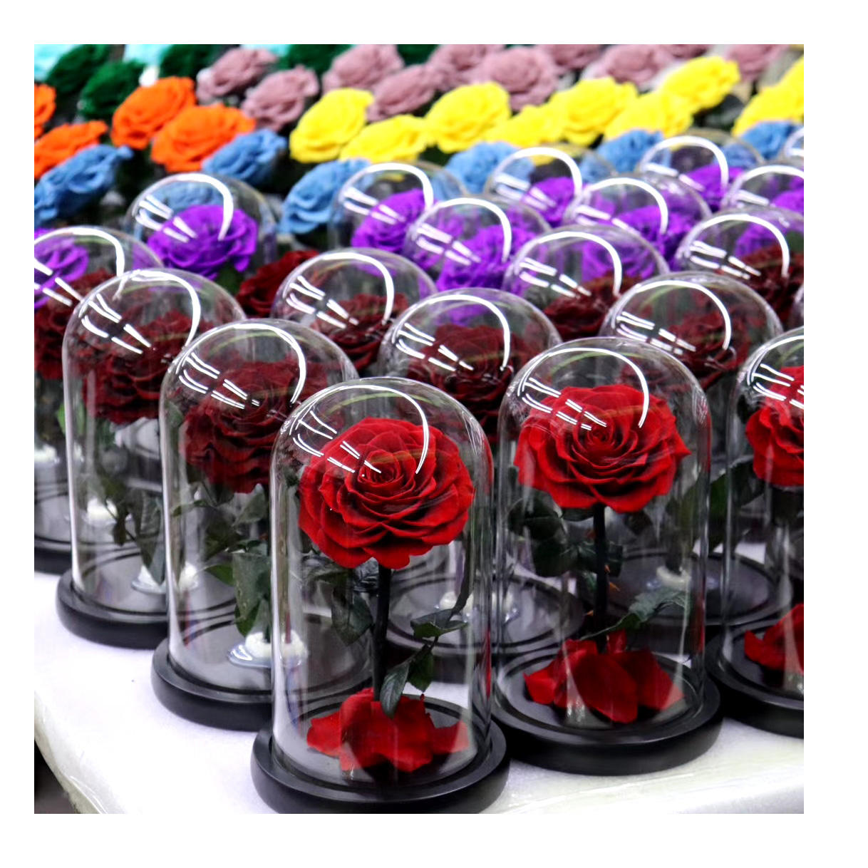 2020 Hot selling Natural preserved roses long life roses eternal roses in dome glass for wedding