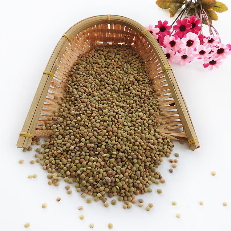 Hot Sale Lentils Beans with Low Price of Green Lentils