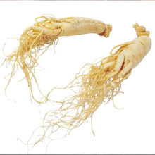 Organic White Ginseng Bai shen Manufacturer Supply Natural Organic White Ginseng Root Slices for Eating and Drinking
