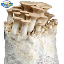 DETAN high production  oyster Mushroom spawns/logs/bags/grow kits  (offer Professional technical guidance )
