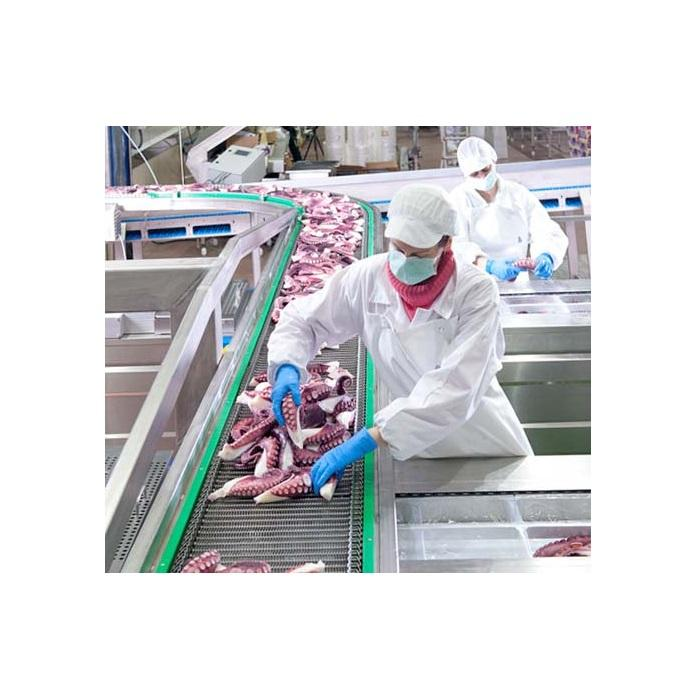 Hot Sale - Fresh Frozen Squid from Vietnam at Competitive Price - Nutritious Squid with CE / EU Certificate - Squid for USA