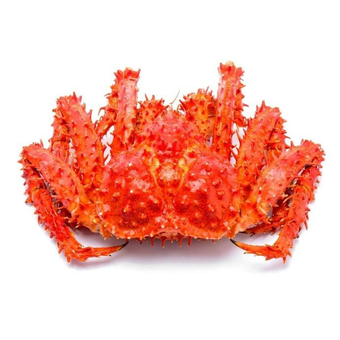king crab Red King Crab Live and Frozen Red king crab for sale