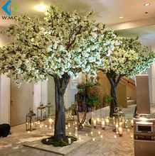White Cherry Tree Product Name and Flower Tree Plant Type Blossom Tree