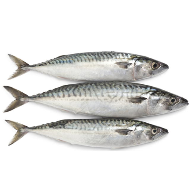 china frozen types of pacific chinese horse mackerel fishes whole round prices