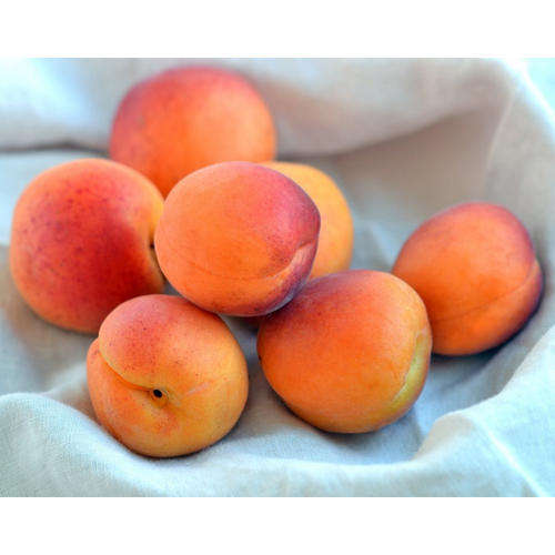 Cheap Fresh Apricots/Frozen Apricots