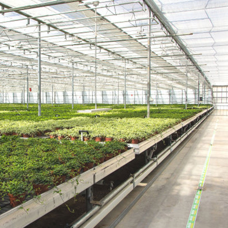 China Manufacturing Multi-span Agricultural Greenhouses Multiple Application Shed Film Strawberry Fruit Planting Green House
