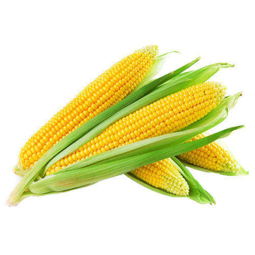 TOP QUALITY YELLOW CORN WITH CERTIFICATE IN TURKEY