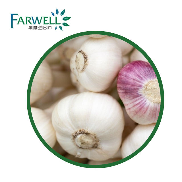 Farwell Pure Garlic Seed Oil For Natural Essential Oil FCC Grade Cas#8000-78-0