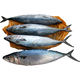 Frozen Horse Fish Mackerel Exporters, Norway Mackerel