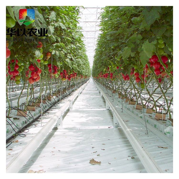 Commercial rock wool vertical hydroponic growing system for tomatoes