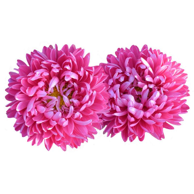 Çiçek yatak <span class=keywords><strong>dekorasyon</strong></span> çin Aster Callistephus Chinensis çiçek <span class=keywords><strong>tohumları</strong></span> bahçe sıcak sezon