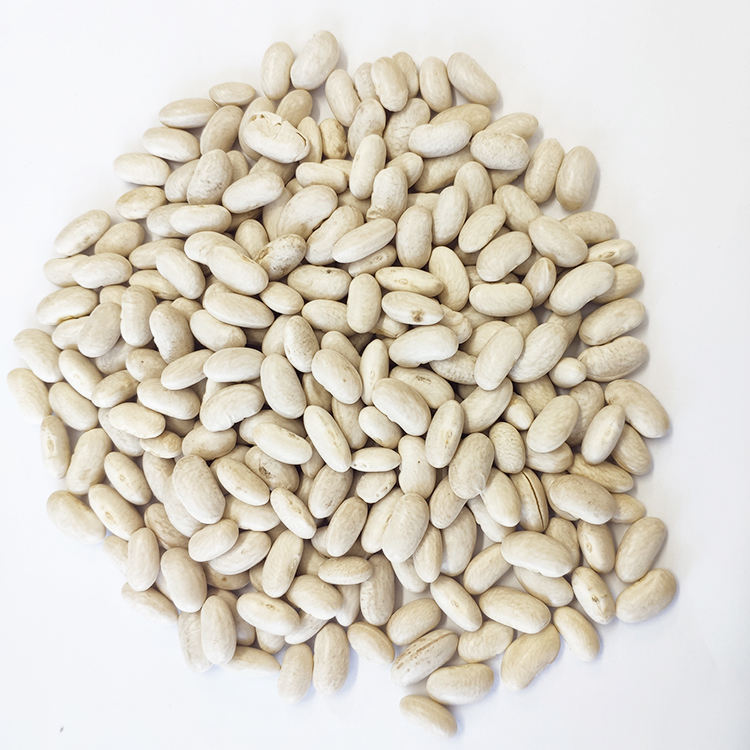 Wholesale High Quality Spanish White Kidney Beans
