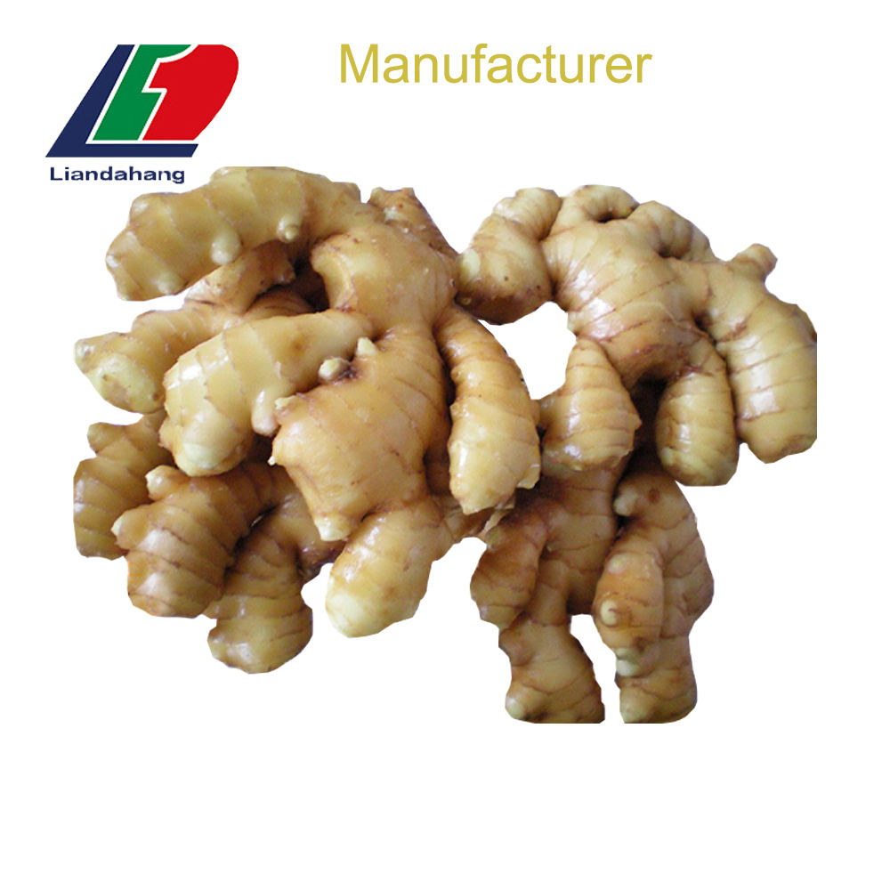Newest Crop Production Area GAP Superior AIR DRY Fresh Ginger Organic, Dried Ginger, 30LB Box 250G Ginger