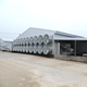 chicken farm metal building steel structure shed poultry closed house system