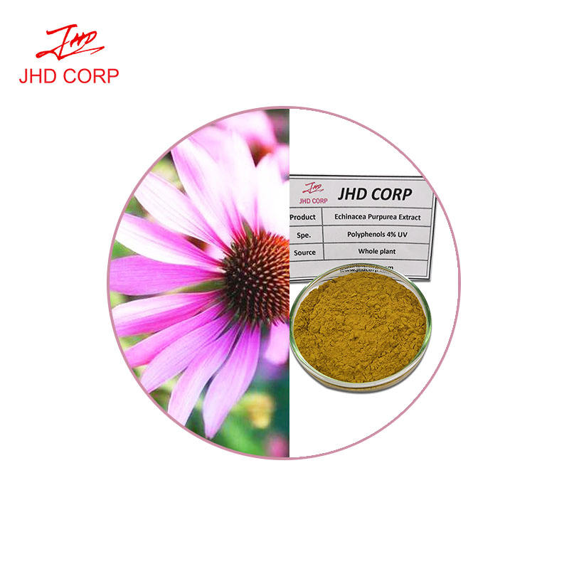 Hot selling Kosher Halal certificated natural echinacea purpurea root extract powder