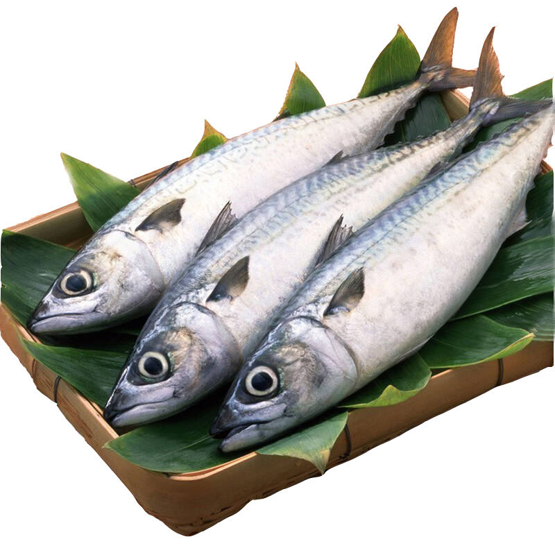Frozen Mackerel Scomber Fish with Good Quality