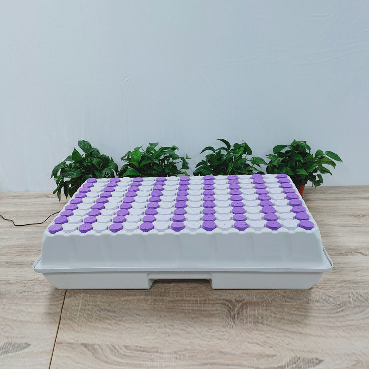 Micro Greens Thermoforming Home Button Mushroom 162 Holes Hydroponic Microgreens Plastic Growing Nursery Trays